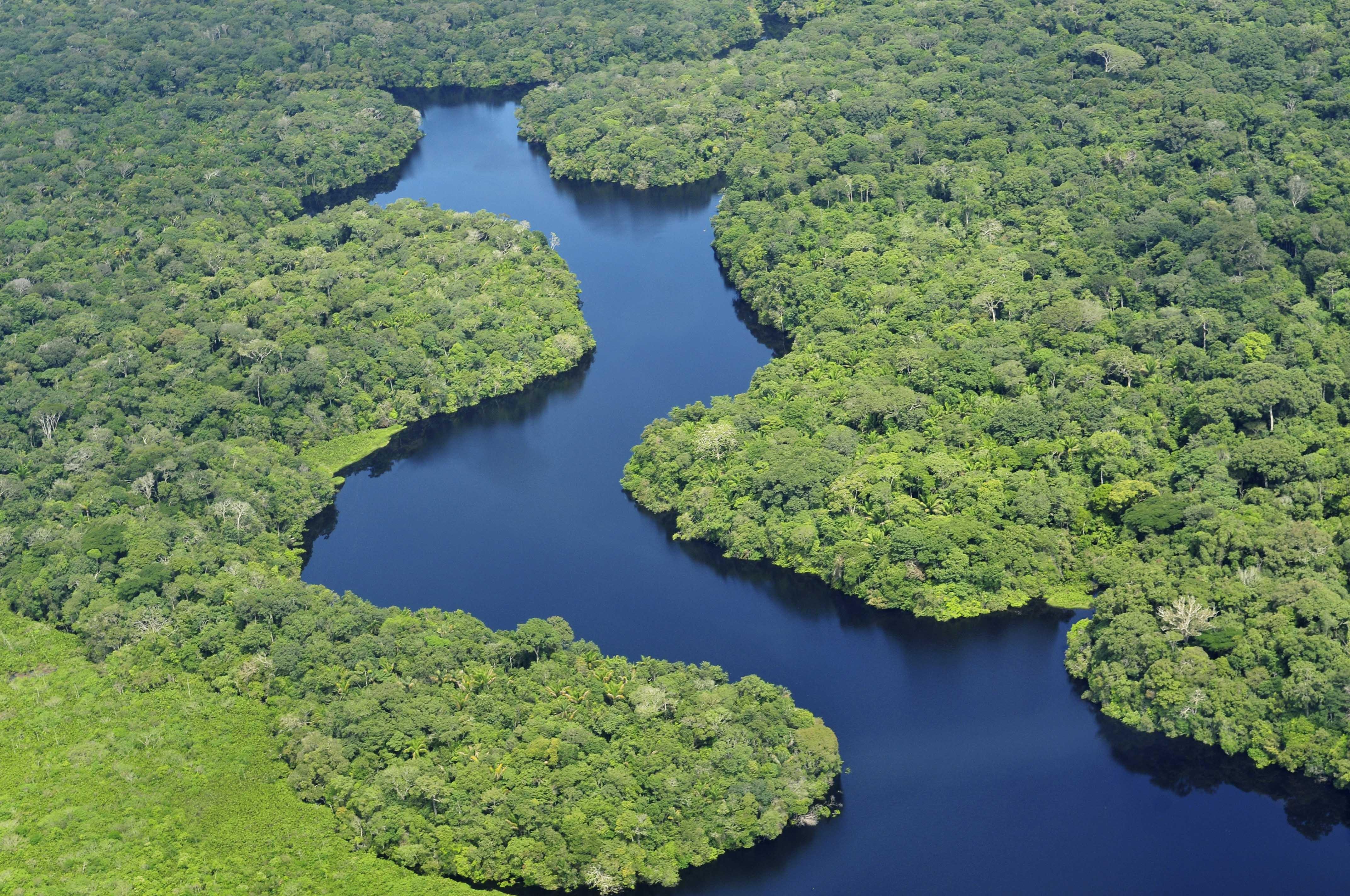 amazon rainforest south america - photo #27