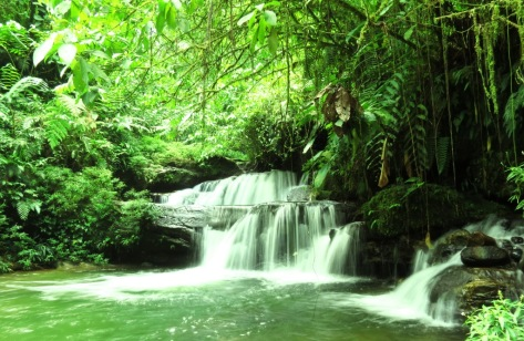 Stunning isolated jungle waterfalls, where you can swim, bathe and relax. Far, far away from civilization, deep inside the magic of the jungle