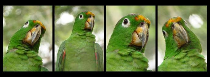 Cute facial expressions from a parrot