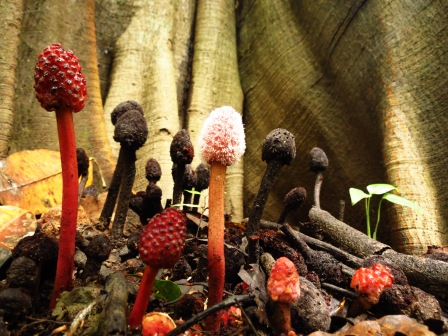 Mushrooms are a everywhere on the dark, moist junglefloor