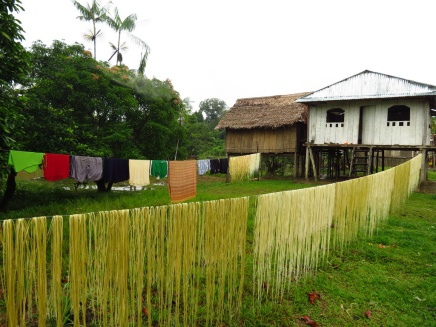 Locals are drying out palm-fibers to be used for weaving of bags, rugs etc.