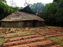 The Maloka, where traditional ceremonies are performed and where the Curaca lives, the cultural chief.
