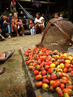 """Pifayo"" they called these jungle fruits and they served a thick, fairly tasty and very filling orange drink to us, made from them."
