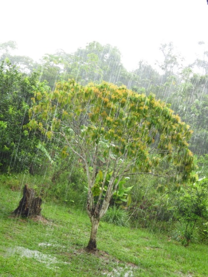 The torrential rains that would turn everything to mud