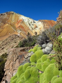 Several forms of vegetation still thrives, just below 5000m (16400 ft). Bolivia.