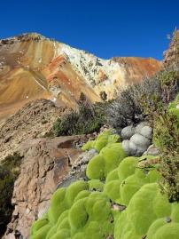 Several forms of vegetation still thrives, just below 5000m (16400 ft). Bolivia.