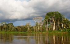 Dense and diverse vegetation in the Amazon