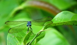Loved photographing the dragonflies, its such an amazing insect.