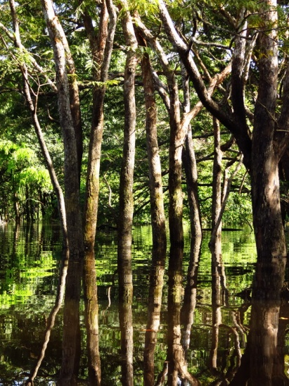 Flooded forest in the stagnant, still waters