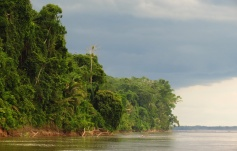 We risked dangerous collisions with tree-trunks and overhanging trees, when the wind or the current would push the raft close to the jungle river-shore.