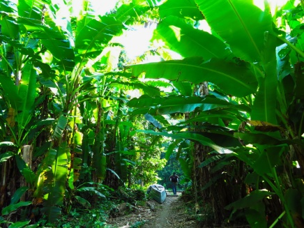 My Xmas expedition was Santana: Entering a community among the banana palms.