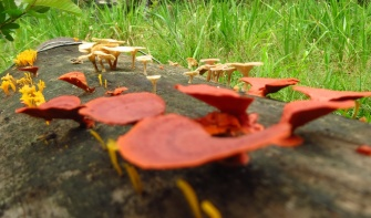Mushrooms in all colors